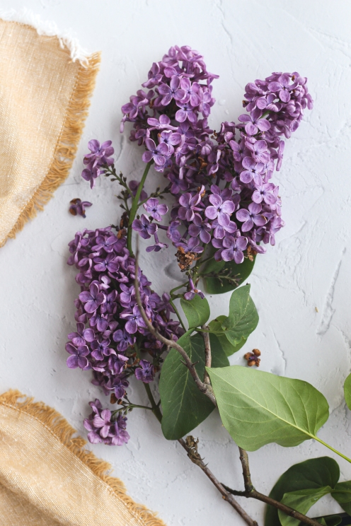 lilac for website