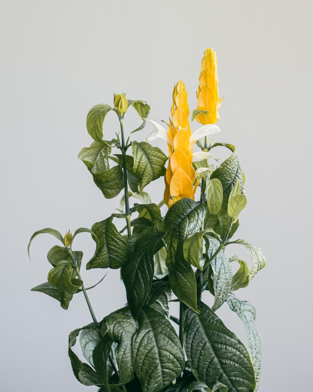 plant from sky nursery-2